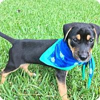 Adopt A Pet :: Diego - South Dennis, MA