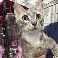 Adopt A Pet :: Joan - Centerville, GA