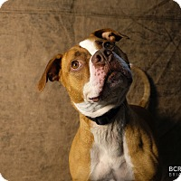 Adopt A Pet :: MAXIMUS - Cliffside Park, NJ