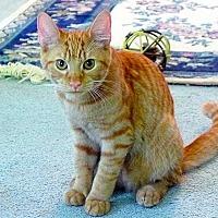 Adopt A Pet :: Spike - Durham, NC