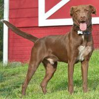 Adopt A Pet :: Alimere - Glen Allen, VA