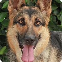 Adopt A Pet :: Lacey von Lachern - Los Angeles, CA