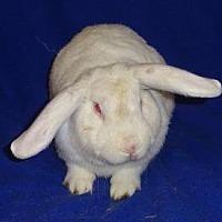 Adopt A Pet :: Theodore - Woburn, MA