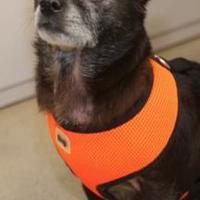 Adopt A Pet :: Sally - San Francisco, CA