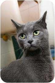 Domestic Mediumhair Cat for adoption in Walker, Michigan - Jorgena