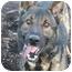 Photo 1 - German Shepherd Dog Mix Dog for adoption in Islip, New York - Jasper
