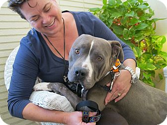 Pit Bull Terrier Mix Dog for adoption in Ojai, California - Tyson