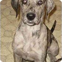 Adopt A Pet :: Hershey - Chandler, IN