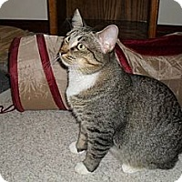 Adopt A Pet :: Lucky Lady - Farmington, AR
