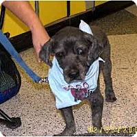 Adopt A Pet :: Donner - Scottsdale, AZ