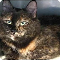 Adopt A Pet :: Heather - Markham, ON