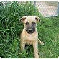 Adopt A Pet :: George (pending adoption) - Adamsville, TN