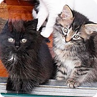 Adopt A Pet :: Chipper - Xenia, OH