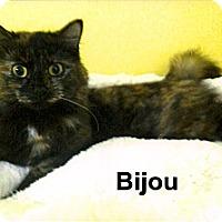 Adopt A Pet :: Bijou - Medway, MA