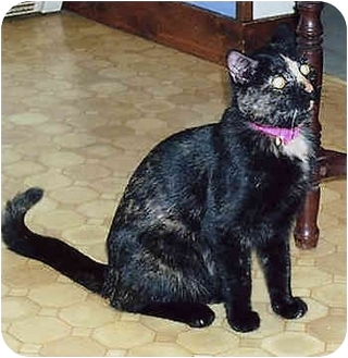 Domestic Shorthair Cat for adoption in Owatonna, Minnesota - Spooky