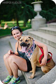 Mastiff/Boxer Mix Dog for adoption in Reisterstown, Maryland - Mia