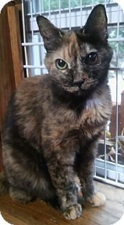 Domestic Shorthair Cat for adoption in Witter, Arkansas - Japonica