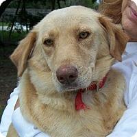 Adopt A Pet :: N Katie - Lafayette, LA