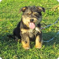 Adopt A Pet :: MARLEY - Hartford, CT