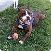 Adopt A Pet :: Cody - Tipp City, OH