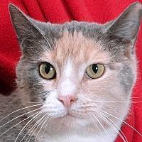 Adopt A Pet :: Patsy - Renfrew, PA