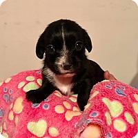 Adopt A Pet :: April - North Brunswick, NJ