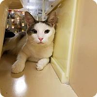 Adopt A Pet :: Mistletoe - Winchester, CA