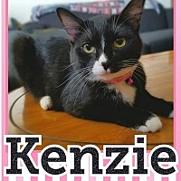 Domestic Shorthair Cat for adoption in Edwards AFB, California - Kenzie