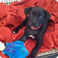 Adopt A Pet :: BELLA-ADOPTED - Portsmouth, NH