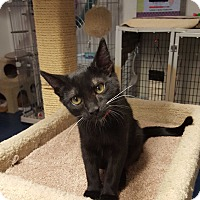Adopt A Pet :: SUGAR PIE - Phoenix, AZ
