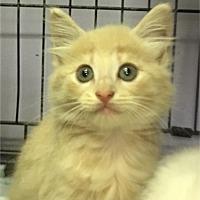 Adopt A Pet :: Honor - Savannah, GA