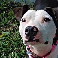 Adopt A Pet :: Kiara - Germantown, OH