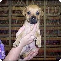 Adopt A Pet :: Lucas - Groveland, FL
