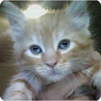 Adopt A Pet :: Ben - Davis, CA