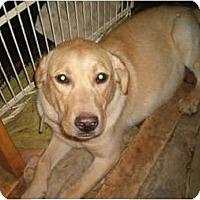 Adopt A Pet :: LI'l Dude - North Jackson, OH