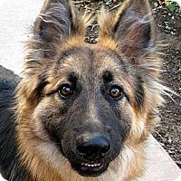 Adopt A Pet :: Baby Elli - Oakley, CA