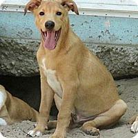 Adopt A Pet :: HUGO - Carrollton, TX