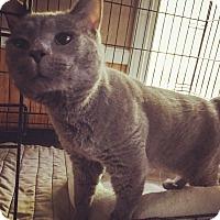 Adopt A Pet :: Hercules - Raleigh, NC