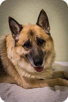 German Shepherd Dog Mix Dog for adoption in Phoenix, Arizona - King (Halo)