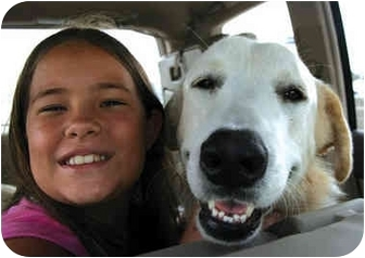 Great Pyrenees Dog for adoption in Kyle, Texas - Beau