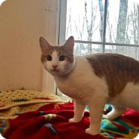 Adopt A Pet :: Cricket - East Stroudsburg, PA