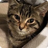 Adopt A Pet :: Henry - Jackson, NJ