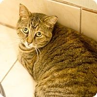 Adopt A Pet :: Moma - Queens, NY