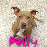 Adopt A Pet :: Polly - Garden City, MI