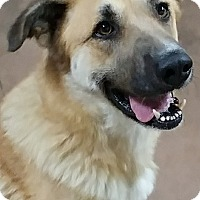 Adopt A Pet :: Zoe - Wilmington, OH