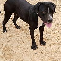 Adopt A Pet :: Medina - Olympia, WA
