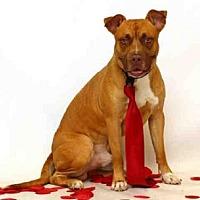 Adopt A Pet :: HANSON - Sanford, FL
