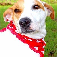 Adopt A Pet :: JoJo - Batesville, AR