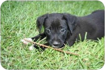 Boxer Mix Puppy for adoption in McDonough, Georgia - Dawson