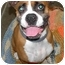 Photo 2 - Boxer Dog for adoption in Fort Bragg, California - Ana